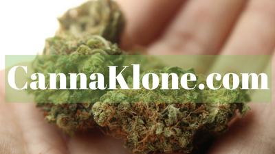cannaKlone.com